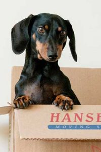 Hanseatic Moving Services - Box